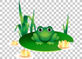真青蛙树青蛙蟾蜍,青蛙PNG剪贴画动物,叶,脊椎动物,生日快乐矢量