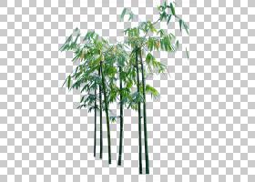 竹子,创意卡通竹树PNG剪贴画卡通人物,树枝,分支,植物茎,棕榈树,
