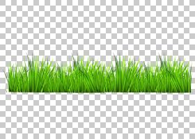 简单的英语词汇库存摄影,草装饰,绿草PNG剪贴画摄影,卡通,alamy,