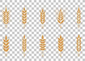 小麦燕麦耳朵图标,金米耳PNG剪贴画金色的框架,食品,卡通,金色矢