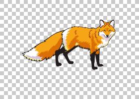 红狐狸绘图,狐狸PNG剪贴画哺乳动物,动物,食肉动物,摄影,狗像哺乳