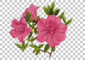 花瓣摄影,花束材料PNG剪贴画草本植物,花卉安排,花卉,海报,卡通,