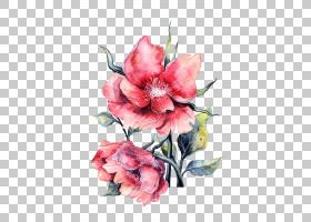 花纸画玫瑰,盛开的水彩牡丹,两个粉红色的花瓣PNG剪贴画水彩画,植