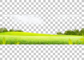 草坪草草甸,草背景,草地和树在白色云彩PNG clipart下电脑壁纸,草