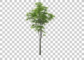 风景树,风景前景树,绿色生叶的树照片与蓝色背景PNG clipart的叶,