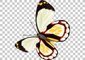 蝴蝶昆虫计算机文件,蝴蝶PNG剪贴画刷脚蝴蝶,蝴蝶群,昆虫,蛾,材料