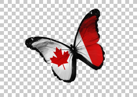 加拿大的旗子库存照片国旗,创造性的蝴蝶PNG clipart国旗,刷脚蝴