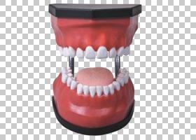 牙科人类牙齿口腔卫生,口腔牙科模型PNG剪贴画名人,牙齿腐烂,医学图片