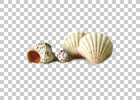 膳食补充剂绘画贝壳海滩,壳PNG剪贴画白色,风景,生日快乐矢量图像图片