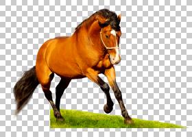 桌面美国季马野马高清电视1080p,野马PNG剪贴画马,电脑,母马,草,