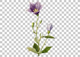 植物学植物学柯蒂斯的植物学杂志,其他PNG剪贴画植物插图,植物学,
