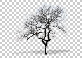雪树科,拉雪死树材料PNG剪贴画冬季,分支机构,单色,电脑壁纸,棕榈