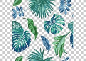 水彩画叶欧几里德,水彩画绿叶,绿叶绘画PNG剪贴画水彩叶子,叶子,