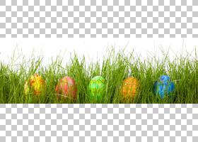 复活节兔子红色复活节彩蛋蛋狩猎,美丽的复活节彩蛋在草PNG剪贴画