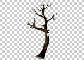 万圣节树,枞树PNG剪贴画假期,分支,植物茎,树枝,桌面壁纸,木材,稻
