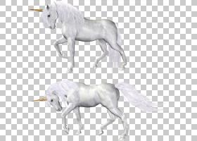 马独角兽,独角兽,两个白色独角兽艺术PNG剪贴画母马,草,虚构人物,图片