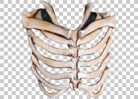 面具肋骨人类骨骼头骨,骨头PNG剪贴画杂项,万圣节服装,骨骼,金属,