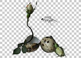 鲜花花束复活节彩蛋植物茎,出生PNG剪贴画儿童,食品,叶,植物茎,复