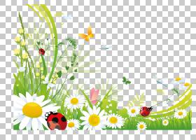 蝴蝶桌面,洋甘菊PNG剪贴画插花,电脑壁纸,昆虫,草,花,洋甘菊,封装