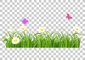 蝴蝶花草坪,草和蝴蝶,白花PNG剪贴画电脑壁纸,花卉园,花卉,花园,