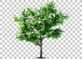肥料果树苹果,树林PNG剪贴画叶,枝,果,性质,植物,灌木,播种,树,树
