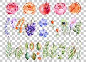 花卉水彩画,水彩花卉,各种颜色的花瓣PNG剪贴画水彩叶子,花卉安排