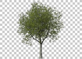 树木本植物灌木Askur,anna PNG剪贴画分支,飞机树,树枝,卡通,灰,图片