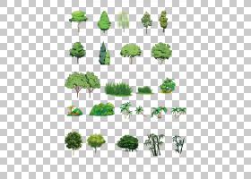树计算机文件,手绘植物PNG剪贴画水彩画,叶,科,计算机程序,植物茎