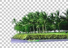 计算机图标,树木物理地图PNG剪贴画其他,树枝,海报,装饰,棕榈树,图片