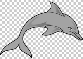 旋转海豚潜水海豚所有关于海豚,旋转海豚的PNG剪贴画海洋哺乳动物图片