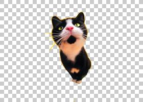 猫食狗黑猫纹身,可爱猫咪PNG剪贴画白色,食物,动物,猫像哺乳动物,图片