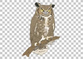 食物链食物网生态系统雨林森林生态,火鸡鸟PNG剪贴画食品,动物,动图片