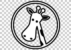 白色长颈鹿图画,长颈鹿图画的PNG clipart白色,哺乳动物,脊椎动物图片