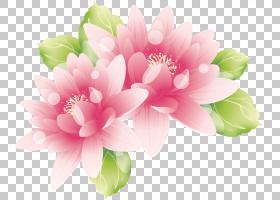 粉红色的花朵,画莲花PNG剪贴画水彩画,草本植物,摄影,手绘花卉,生