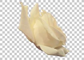 光栅图形,白玫瑰PNG剪贴画的一面png材料,白色,黑色白色,花卉,dev