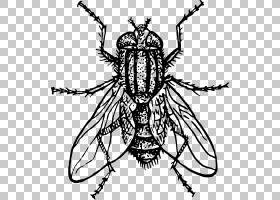 家蝇绘图昆虫,飞PNG剪贴画动物,对称性,单色,颜色,虚构人物,卡通,