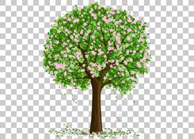 树艺术,树PNG剪贴画分支,植物茎,草,花卉,免版税,桌面壁纸,春天,