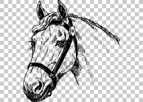 野马阿拉伯马种马小马绘图,水彩马PNG剪贴画马,哺乳动物,carnivor图片