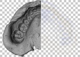 牙科X射线显微断层扫描计算机断层扫描假牙,X射线PNG剪贴画牙科,