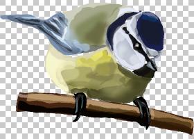 鸟屋麻雀鹅口疮欧亚蓝山雀,蓝鸟PNG剪贴画动物,野生动物,动物,鸟,
