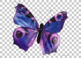 蝴蝶动物鸟Leporids复活节兔子,声音PNG剪贴画紫色,刷脚蝴蝶,紫罗