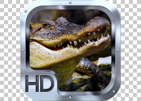 Crocodile桌面高清电视显示分辨率高清视频,鳄鱼PNG剪贴画动物,桌