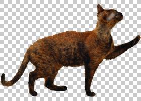 猫小猫剪影狗猫PNG剪贴画哺乳动物,动物,猫像哺乳动物,食肉动物,