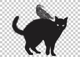 黑猫猫科动物万圣节,黑猫PNG剪贴画哺乳动物,动物,猫像哺乳动物,