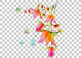 花卉植物群,晴雨表PNG剪贴画图像文件格式,植物茎,花,晴雨表,花瓣