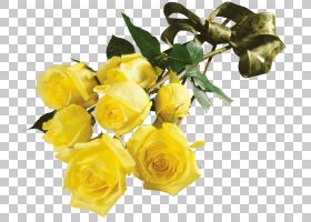花园玫瑰花束黄色室内植物,白玫瑰PNG剪贴画插花,白色,floribunda