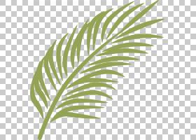 棕榈分支棕榈星期天Arecaceae,香蕉叶PNG剪贴画杂项,叶子,其他,草图片