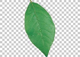 植物病理学叶,叶PNG剪贴画叶子,病理学,食品饮料,性质,植物,植物