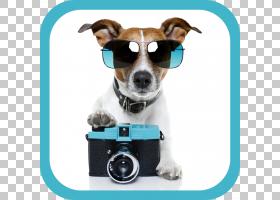 杰克罗素梗犬宠物坐小狗股票摄影,狗PNG剪贴画动物,摄影,宠物,狗图片