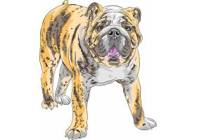 手绘犬科动物狗狗主题插画设计